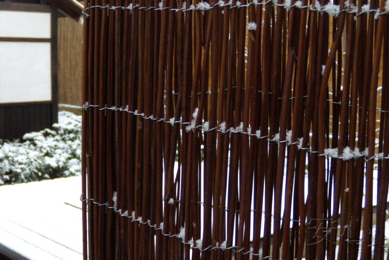 Fence of the tree-fern